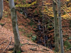 Górski potok przy szlaku na Małą Rawkę