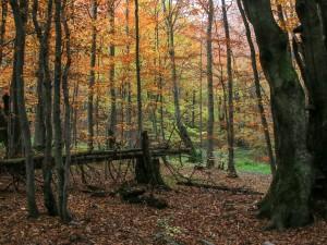 Jesienny las w drodze na Małą Rawkę