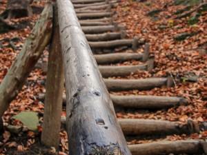 Leśny szlak na Małą Rawkę